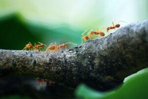 Pest Control Palm Desert