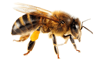 Bee Control -- On The Fly