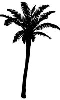 queen-palm-tree-clipart-4